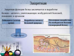 Защитная Защитная функция белка заключается в выработке белков – антител, ун