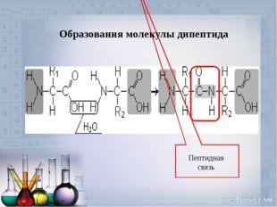 Пептидная связь Образования молекулы дипептида
