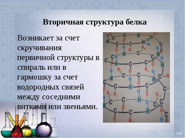 Вторичная структура белка Возникает за счет скручивания первичной структуры в...