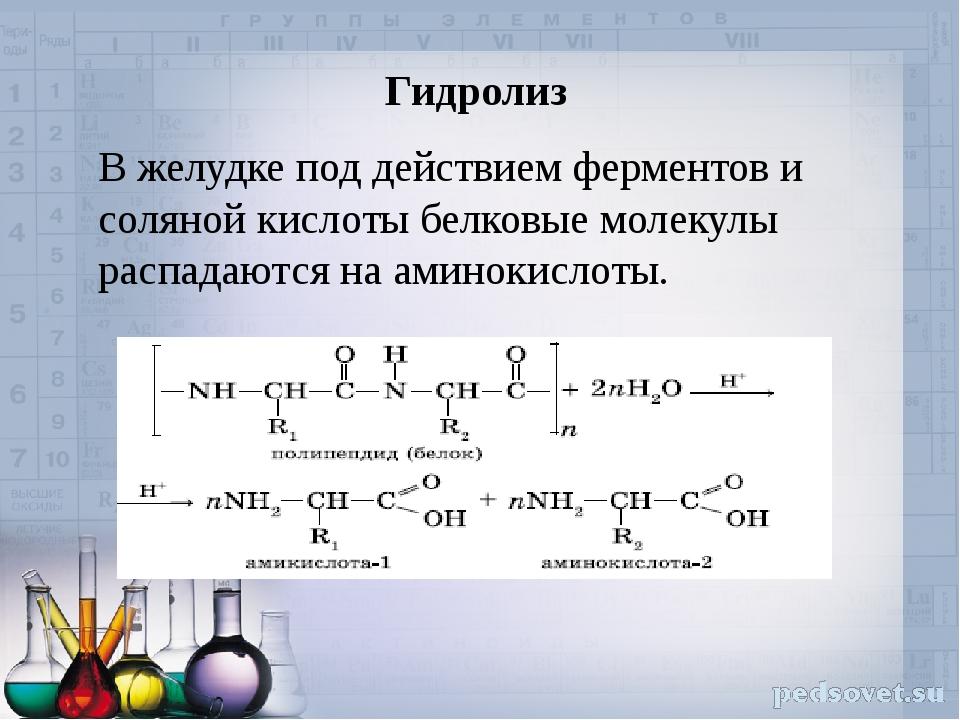 Гидролиз В желудке под действием ферментов и соляной кислоты белковые молекул...