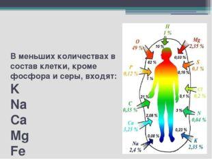 В меньших количествах в состав клетки, кроме фосфора и серы, входят: K Na Ca