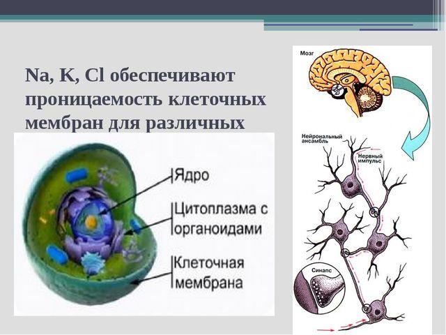 Na, K, Cl обеспечивают проницаемость клеточных мембран для различных веществ...