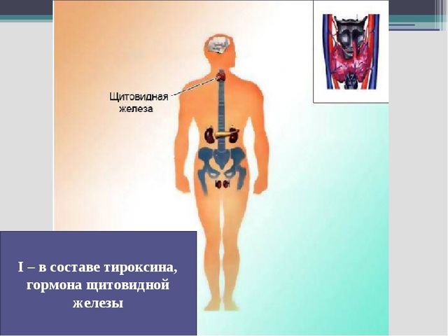 I – в составе тироксина, гормона щитовидной железы