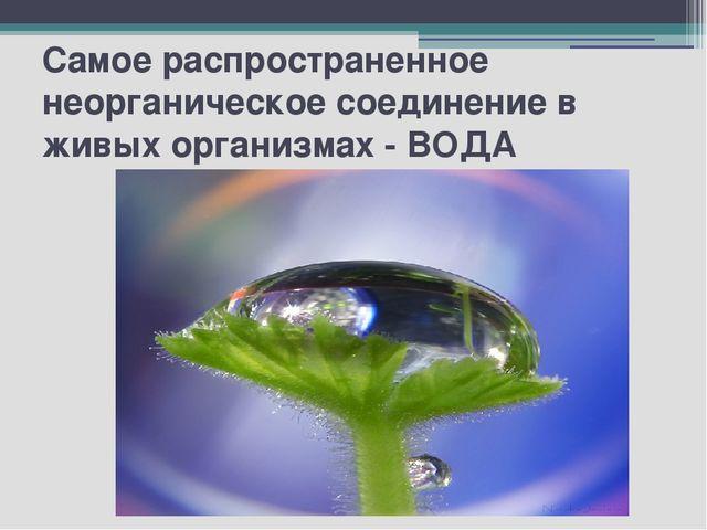 Самое распространенное неорганическое соединение в живых организмах - ВОДА