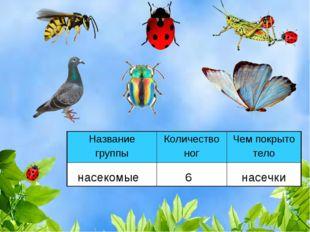 насекомые 6 насечки Название группыКоличество ногЧем покрыто тело