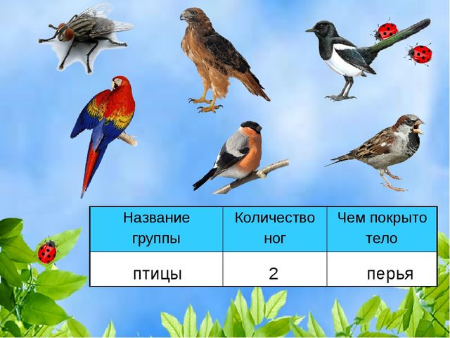 птицы 2 перья Название группыКоличество ногЧем покрыто тело