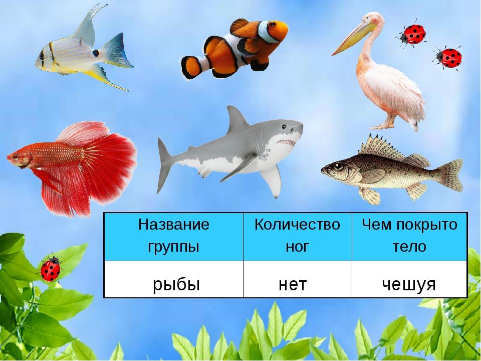 рыбы нет чешуя Название группыКоличество ногЧем покрыто тело