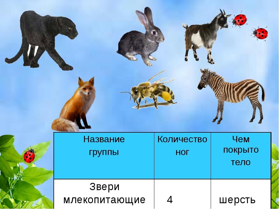 Звери млекопитающие 4 шерсть Название группыКоличество ногЧем покрыто тело...