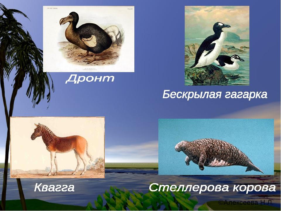 ©Алексеева Н.Л.