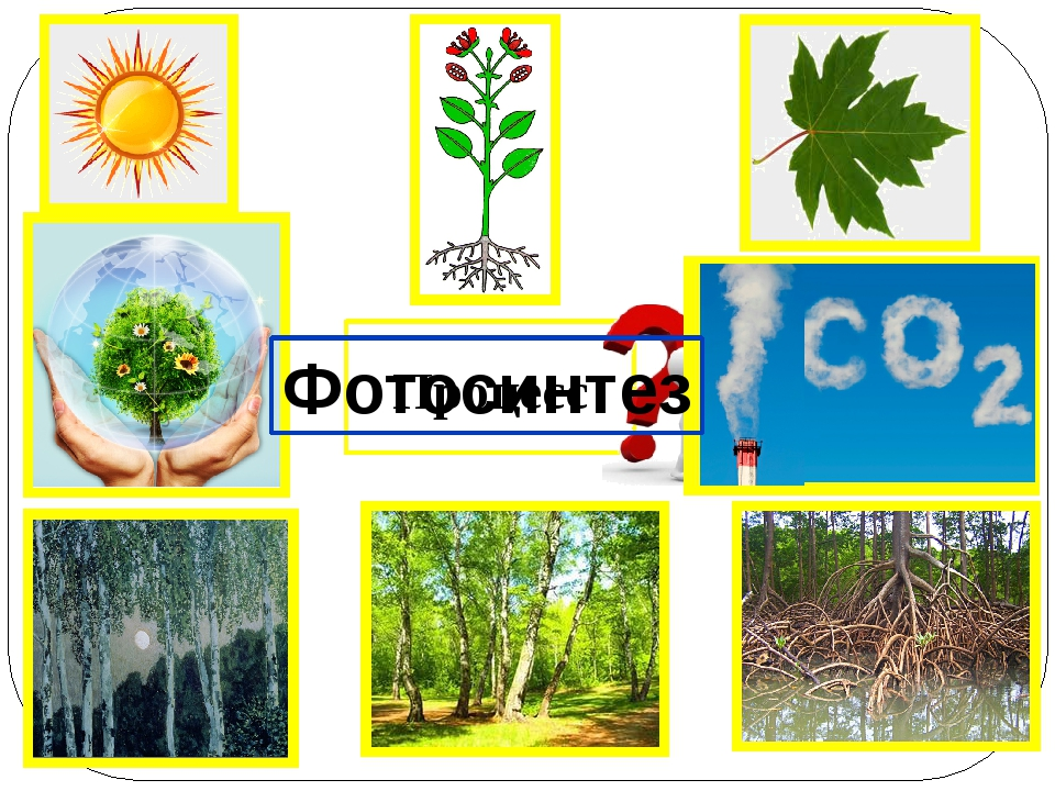 Процесс Фотосинтез