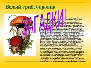 Белый гриб, боровик Гриб всем грибам - такое мнение о нем в народе. Белым его