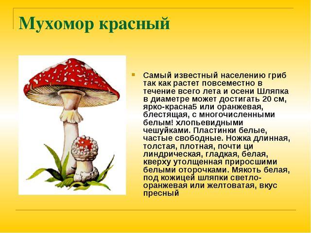 Мухомор красный Самый известный населению гриб так как растет повсеместно в т...