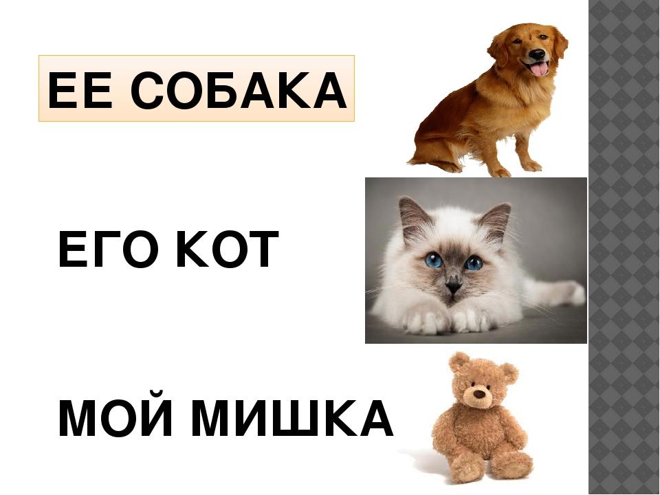 ЕЕ СОБАКА ЕГО КОТ МОЙ МИШКА