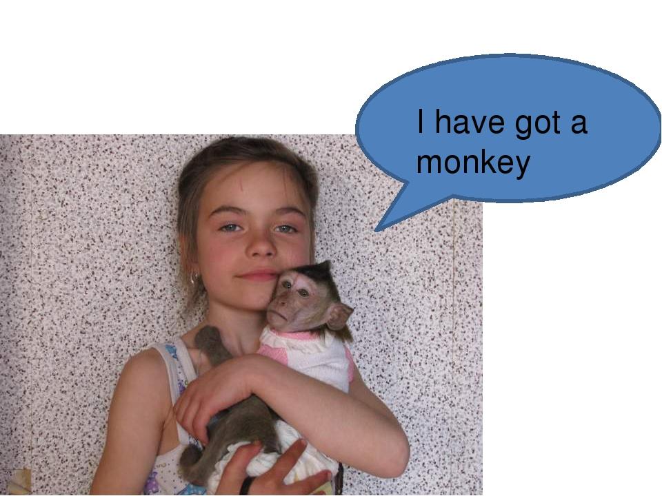 I have got a monkey