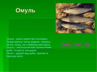 Омуль Омуль - рыба семейства лососевых. Представлено пятью видами: таймень,