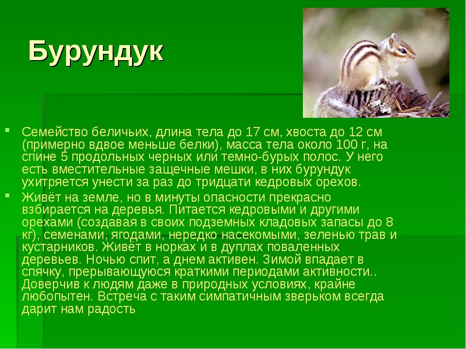 Бурундук Семейство беличьих, длина тела до 17 см, хвоста до 12 см (примерно в...
