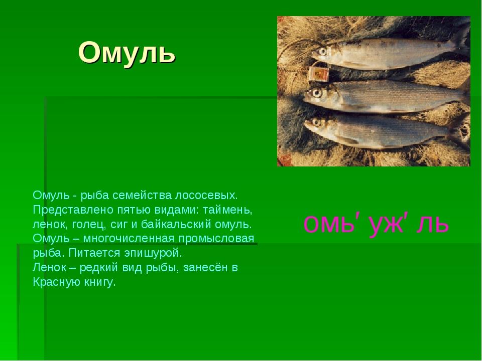 Омуль Омуль - рыба семейства лососевых. Представлено пятью видами: таймень,...