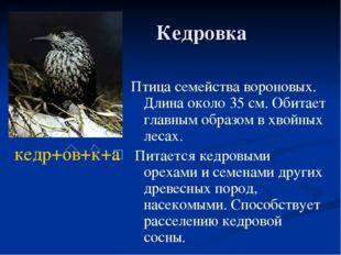 Кедровка Птица семейства вороновых. Длина около 35 см. Обитает главным образ