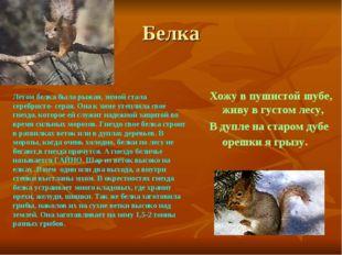 Белка Хожу в пушистой шубе, живу в густом лесу, В дупле на старом дубе орешки