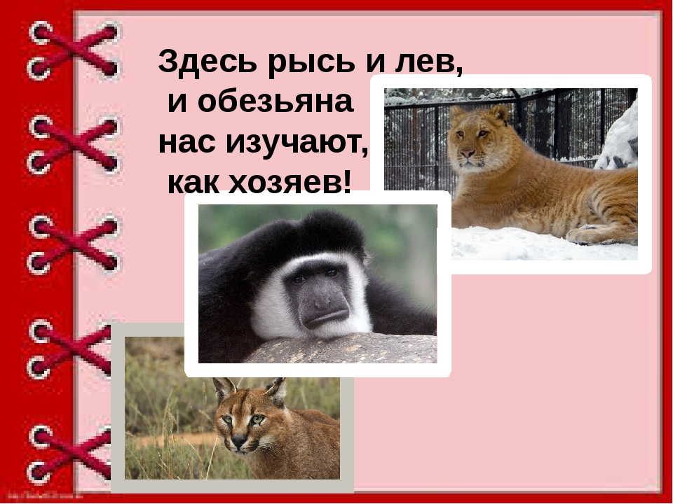 Здесь рысь и лев, и обезьяна нас изучают, как хозяев!