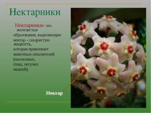 Нектарники Нектарники- это железистые образования, выделяющие нектар - сахари