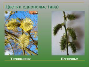 Цветки однополые (ива) Тычиночные Пестичные