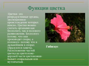 Функции цветка Цветки- это репродуктивные органы, эволюционное происхождение