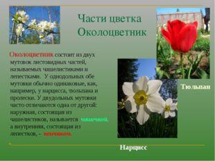 Части цветка Околоцветник Околоцветник состоит из двух мутовок листовидных ча