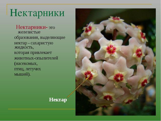 Нектарники Нектарники- это железистые образования, выделяющие нектар - сахари...