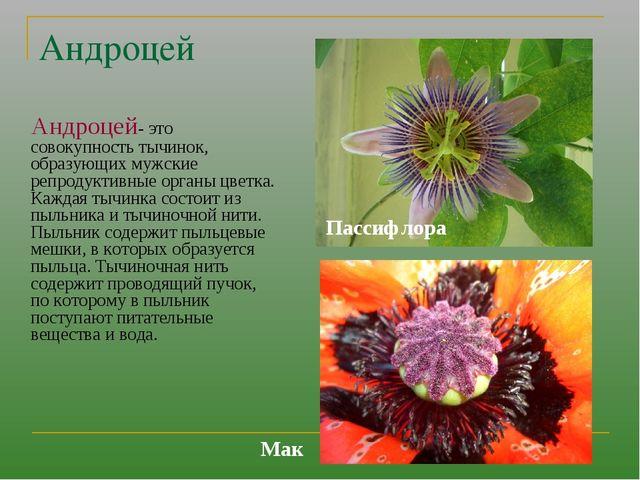 Андроцей Андроцей- это совокупность тычинок, образующих мужские репродуктивны...