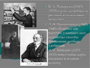 К. А. Тимирязев (1843-1920) изучил потребности растений в питательных веществ