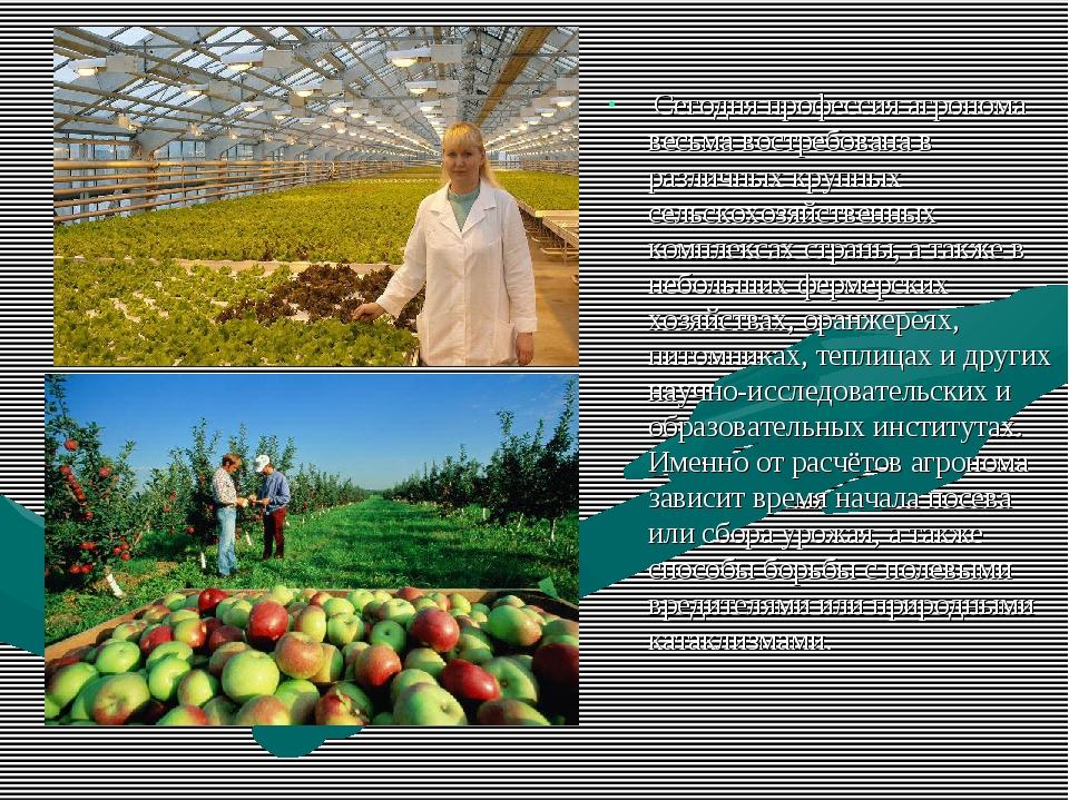 Сегодня профессия агронома весьма востребована в различных крупных сельскохо...