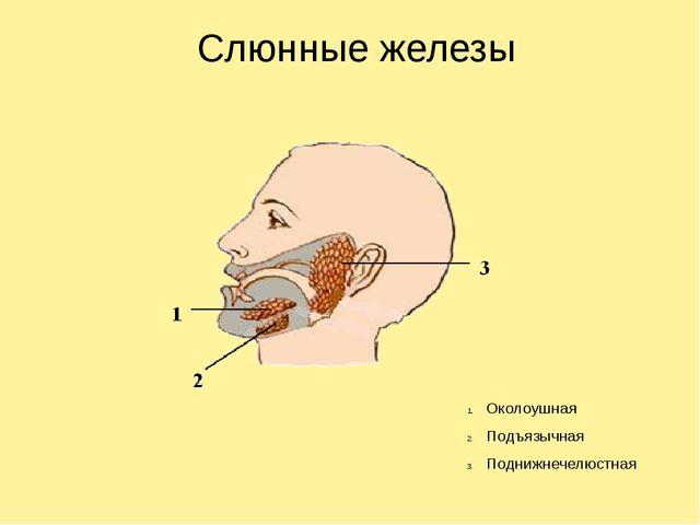 Слюнные железы Околоушная Подъязычная Поднижнечелюстная
