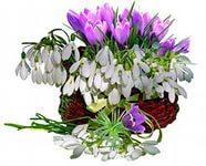 hello_html_m6a439788.jpg