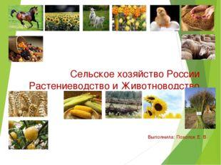 Сельское хозяйство России Растениеводство и Животноводство Выполнила: Похолок