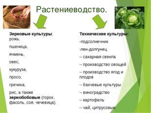 Растениеводство. Зерновые культуры: рожь, пшеница, ячмень, овес, кукуруза, п