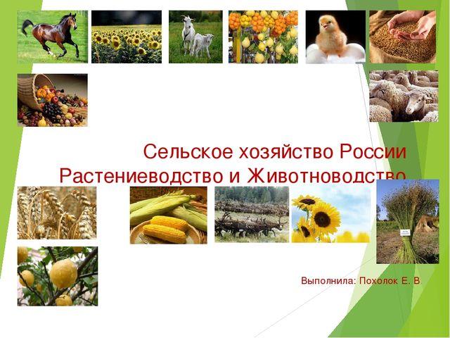 Сельское хозяйство России Растениеводство и Животноводство Выполнила: Похолок...