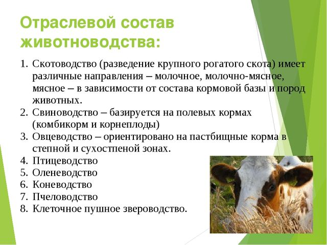 Отраслевой состав животноводства: Скотоводство (разведение крупного рогатого...