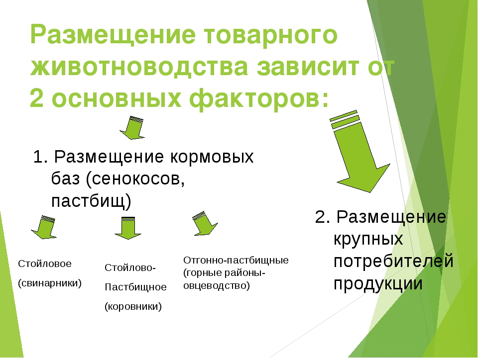 Размещение товарного животноводства зависит от 2 основных факторов: 1. Размещ...