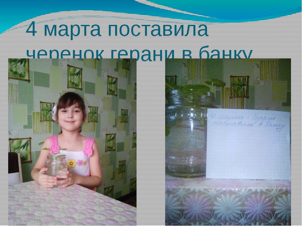4 марта поставила черенок герани в банку с водой.