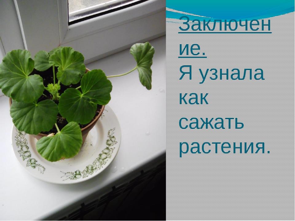 Заключение. Я узнала как сажать растения.