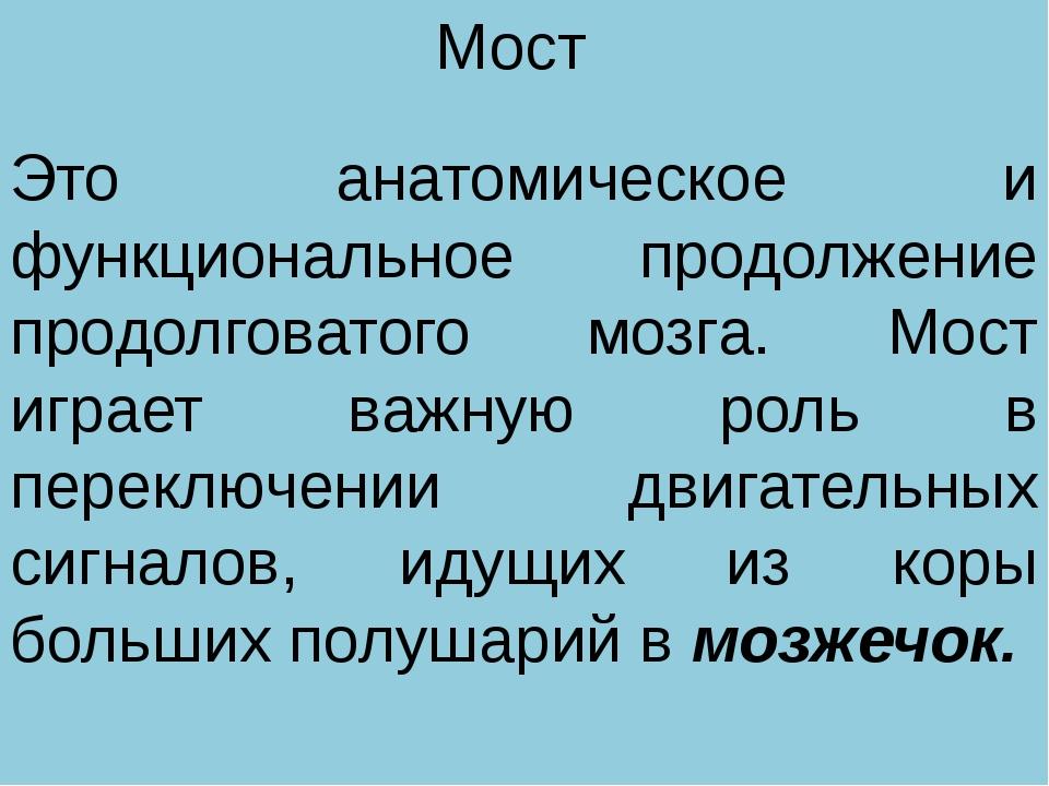 Мост Это анатомическое и функциональное продолжение продолговатого мозга. Мос...