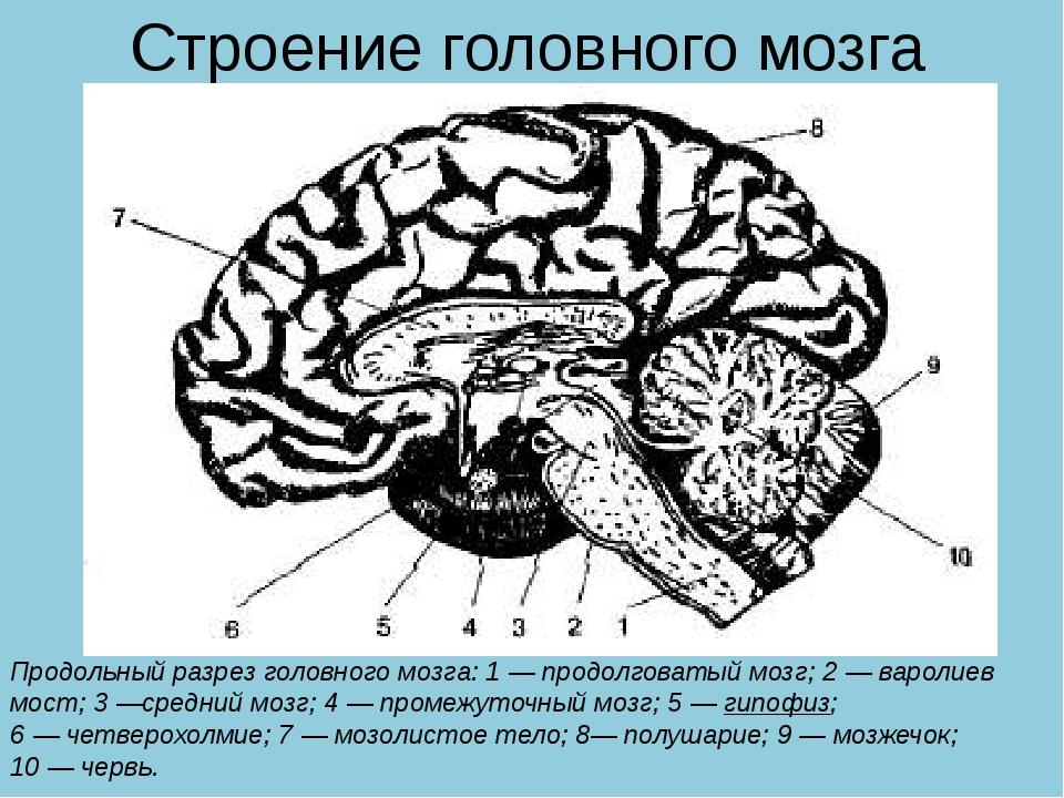 Строение головного мозга Продольный разрез головного мозга: 1—продолговатый...