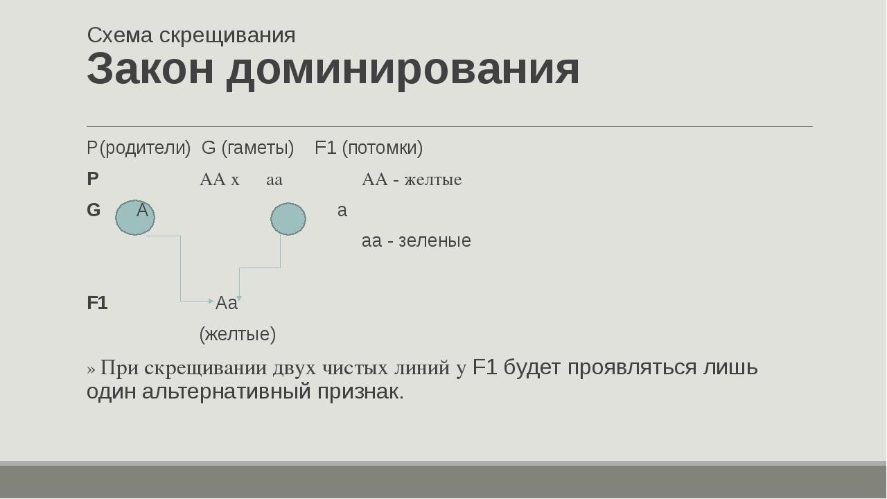 Схема скрещивания Закон доминирования P(родители) G (гаметы) F1 (потомки) P...