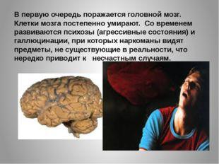 В первую очередь поражается головной мозг. Клетки мозга постепенно умирают. С