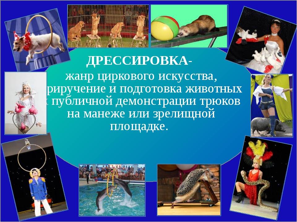 ДРЕССИРОВКА- жанр циркового искусства, приручение и подготовка животных к пу...
