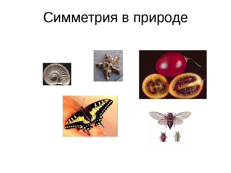 Симметрия в технике Назад