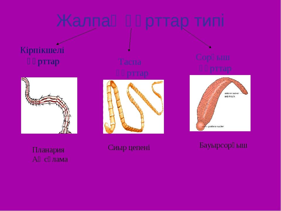 Жалпақ құрттар типі Кірпікшелі құрттар Таспа құрттар Сорғыш құрттар Планария...