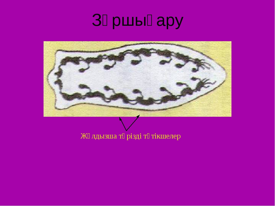 Зәршығару Жұлдызша тәрізді түтікшелер