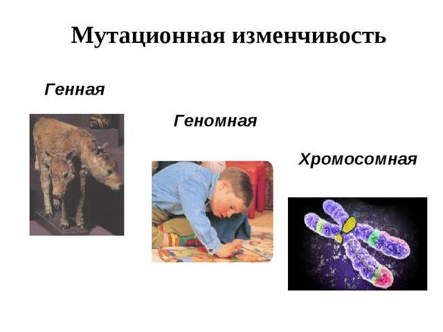 Мутационная изменчивость Генная Хромосомная Геномная